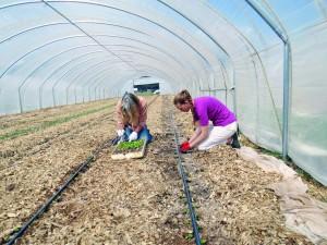 GN-MR-2-EverGreen Farm608