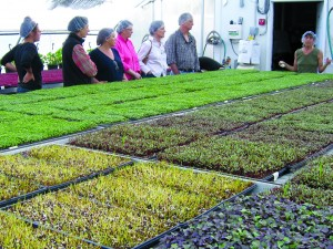 Owner Lauri Roberts leads a greenhouse tour at Farming TurtlesÊin Exeter, RI.