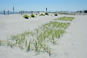 GO-MR-3-COASTAL-RESTOR-sea-oats1