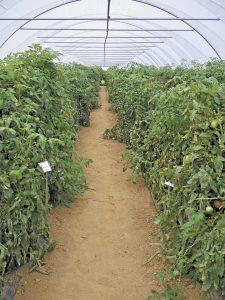 GO-49-3-Plant-Nutrition-pt12-c