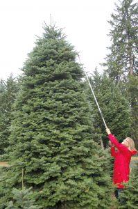 gn-mr-52-3-tree-wisemans-9303
