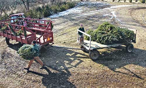 Hann's Christmas Farm - Hann's Christmas Farm - Country Folks Grower